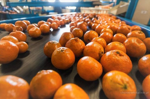 Holandia-Praca wakacyjna dla Studentów na produkcji
