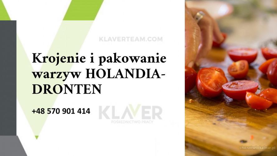 SAŁATKI obiadowe produkcja  i pakownie warzyw od zaraz - Holandia